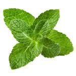 Peppermint leaf (Mentha Piperita Leaf)